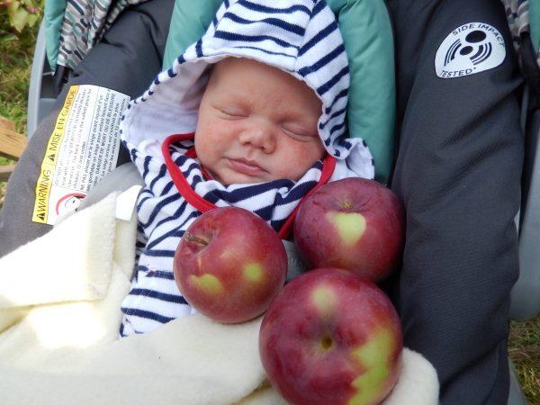 Blogue exploreVS - autocueillette de pommes en famille